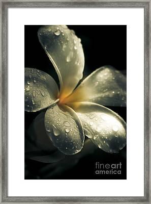 Spring Flower Framed Print