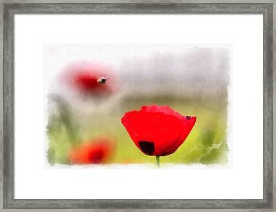 Spring Flowering Poppies Framed Print