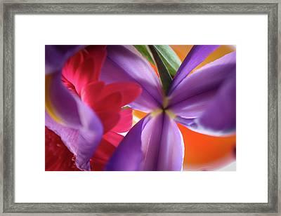 Spring Flowers 002 Framed Print