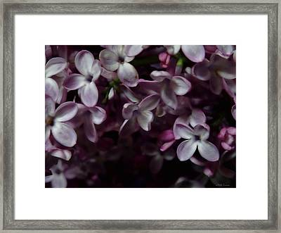 Spring Flowers 2 Framed Print by Mikki Cucuzzo