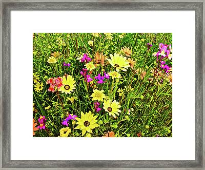 Spring Flowers Along California Highway 99 Framed Print by Ruth Hager