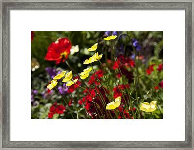 Spring Flowers Framed Print by Garry Gay