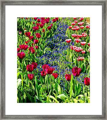 Spring Flowers Impression Framed Print by Olivier Le Queinec