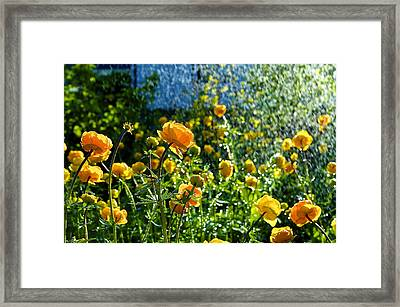 Spring Flowers In The Rain Framed Print by Tamara Sushko