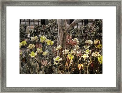Framed Print featuring the photograph Spring Flowers by Joann Vitali