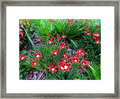 Spring Flowers Framed Print by Joyce Woodhouse