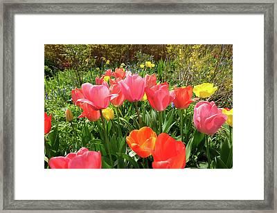 Spring Flowers Framed Print