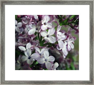 Spring Flowers Framed Print by Mikki Cucuzzo
