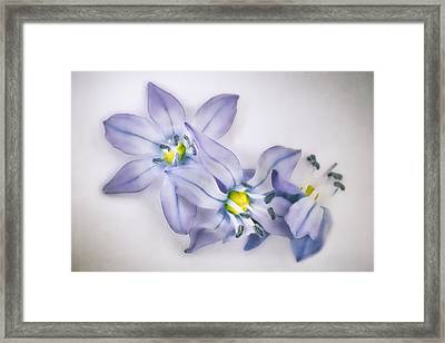Spring Flowers On White Framed Print by Scott Norris