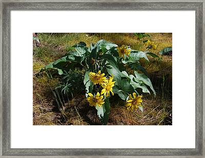 Spring Flowers Framed Print by Sergey and Svetlana Nassyrov