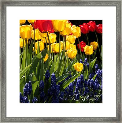 Spring Flowers Square Framed Print by Carol Groenen