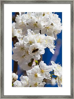 Spring Flowers Framed Print by Tracey Hunnewell