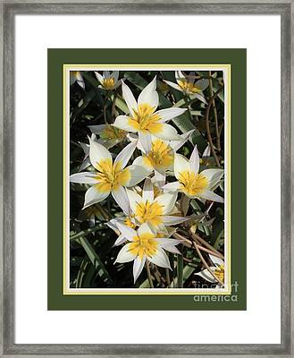Spring Flowers With Green Border Framed Print