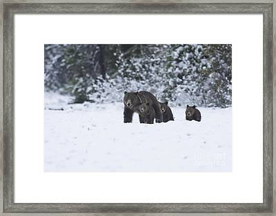 Spring Folly Framed Print
