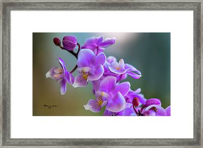 Framed Print featuring the photograph Spring For You by Marvin Spates