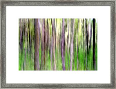 Spring Forest Framed Print by Doug Hockman Photography