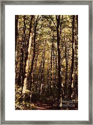 Framed Print featuring the photograph Spring Forest by Jean Bernard Roussilhe