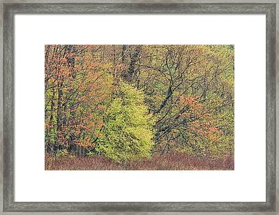 Spring Forest Mud Lake Framed Print by Dean Pennala