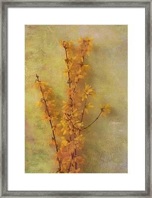 Spring Forsythia Framed Print