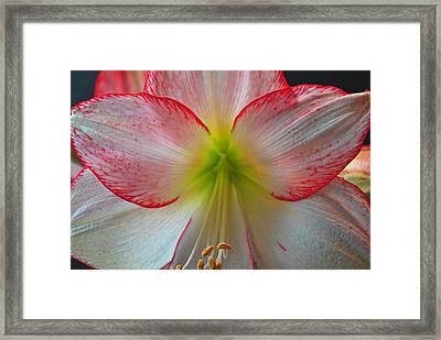 Spring Forth Framed Print