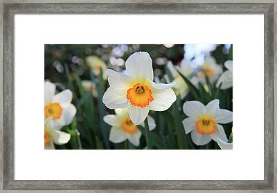 Spring Fresh Framed Print by Pierre Leclerc Photography