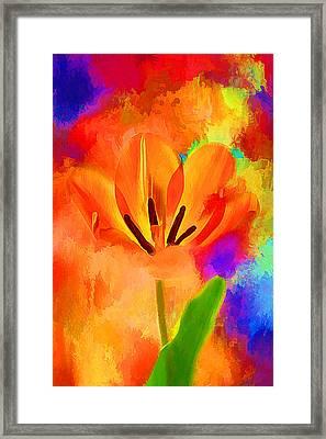 Spring Full Of Color Framed Print by Darren Fisher