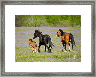Spring Gallop Framed Print