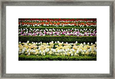 Framed Print featuring the photograph Spring Garden - Colorful Tulips by Frank Tschakert