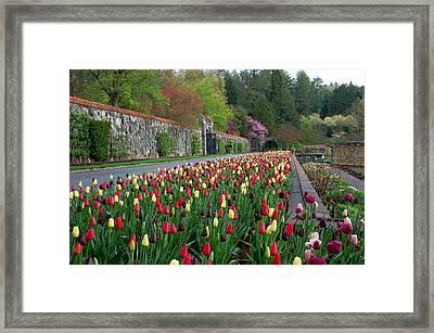Spring Garden View IIi Framed Print by Suzanne Gaff