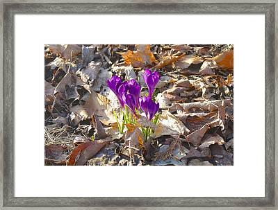 Spring Gathering Framed Print