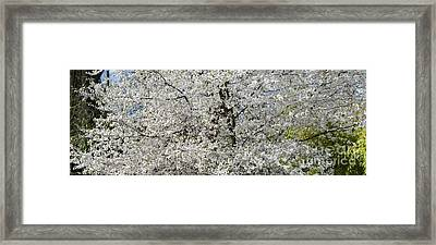 Spring Glory Framed Print by Tim Gainey