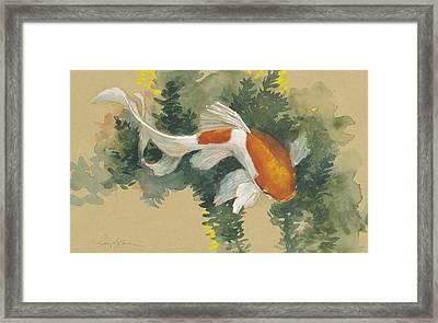 Curvy Goldfish  Framed Print