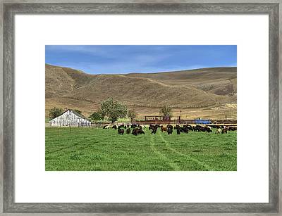 Framed Print featuring the photograph Spring Grazing by Donna Kennedy