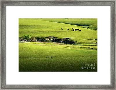 Spring Grazing Framed Print by Fred Lassmann
