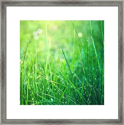 Spring Green Grass Framed Print by Dirk Wüstenhagen Imagery