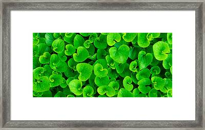 Spring Green Framed Print by Leah Dore