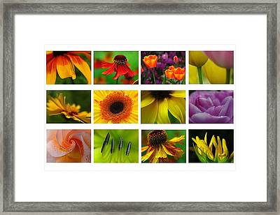 Spring Greetings Framed Print by Juergen Roth
