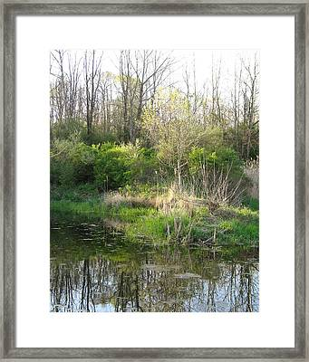 Spring Framed Print by Harry  Kellow