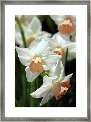 Spring Has Spring Framed Print by Mary Haber