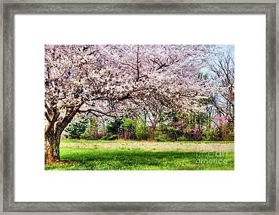 Spring Has Sprung Framed Print by Darren Fisher
