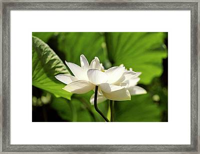 Spring Has Sprung Framed Print by Geraldine Scull