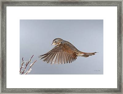 Framed Print featuring the photograph Spring Has Sprung by Gerry Sibell