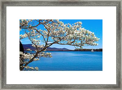 Spring Has Sprung Smith Mountain Lake Framed Print