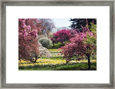 Spring Has Sprung Framed Print by Jessica Jenney