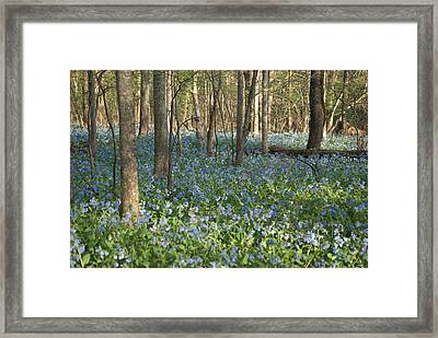 Framed Print featuring the photograph Spring by Heidi Poulin