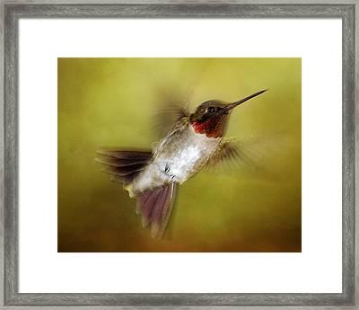 Spring Hummingbird Framed Print