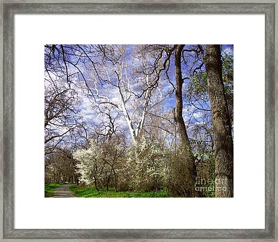 Spring In Bidwell Park Framed Print