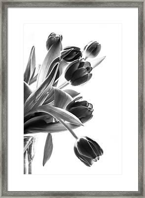 Spring In Black And White Framed Print by Maggie Terlecki