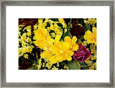 Framed Print featuring the photograph Spring In Dallas by Diana Mary Sharpton