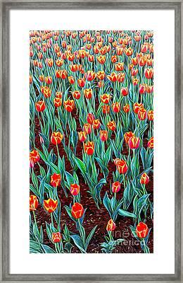 Spring In Holland Framed Print